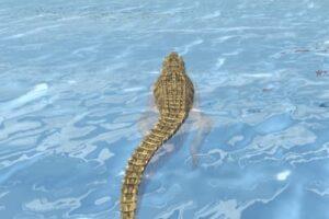 croc beach